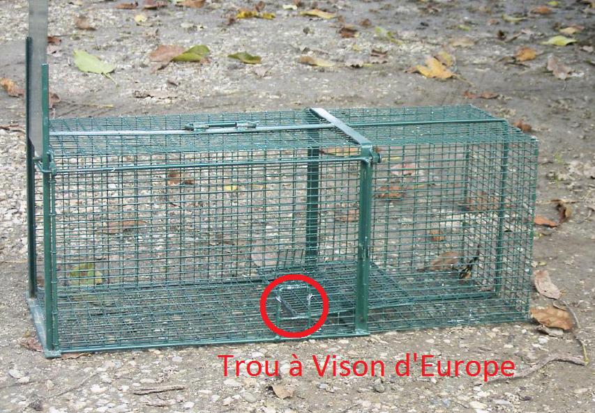Myocastor coypu - cage piège munie d'un trou à vison - ADPAG