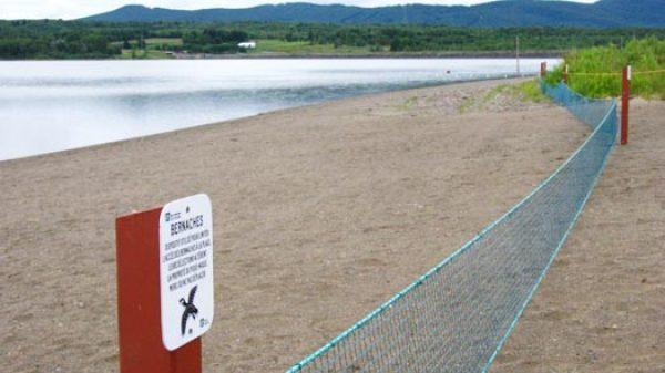 Branta canadensis- filet d'exclusion - Canadaparks
