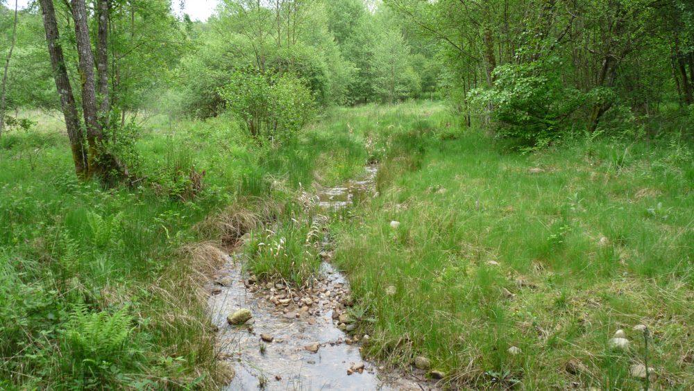 Pacifastacus leniusculus - cours d'eau après restauration - Marc Collas