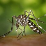 Aedes albopictus - Domaine public, par James Gathany - Center for Disease Control and Prevention