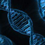 brins ADN - (cc) Pixabay - Centre de ressources EEE