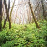 Paysage foret (c) Raico-rosenberg Liste rouge