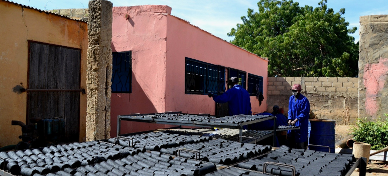 Séchage des briquettes de charbon de Typha après le briquetage -Unité de production du village de Garack dans la commune de Rosso en Mauritanie. Source : GRET